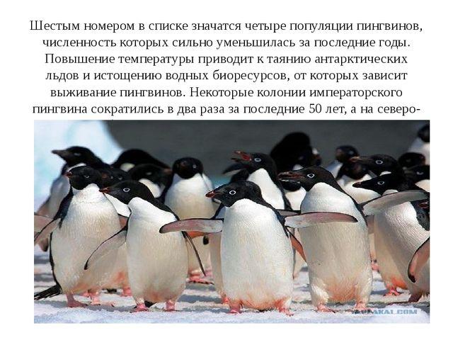 Шестым номером в списке значатся четыре популяции пингвинов, численность кото...