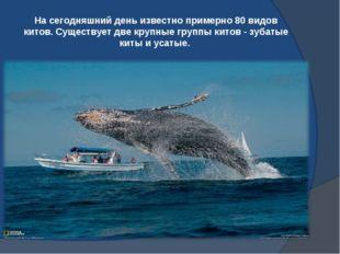 На сегодняшний день известно примерно 80 видов китов. Существует две крупные