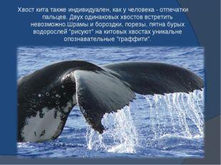 Хвост кита также индивидуален, как у человека - отпечатки пальцев. Двух одина