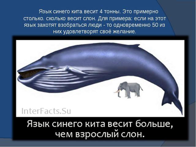 Язык синего кита весит 4 тонны. Это примерно столько. сколько весит слон. Дл...