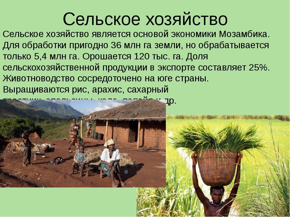 Сельское хозяйство Сельское хозяйство является основой экономики Мозамбика. Д...