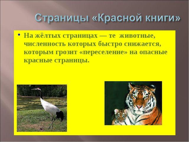 На жёлтых страницах — те животные, численность которых быстро снижается, кото...