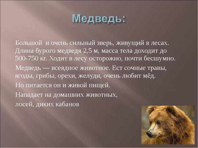 Большой и очень сильный зверь, живущий в лесах. Длина бурого медведя 2,5 м, м...