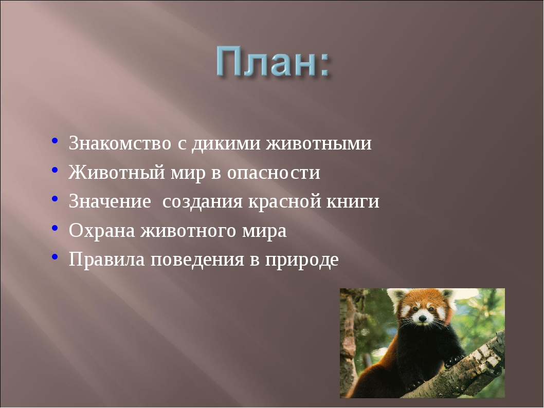 Знакомство с дикими животными Животный мир в опасности Значение создания крас...