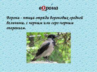 ворона Ворона - птица отряда вороновых средней величины, с черным или серо-че