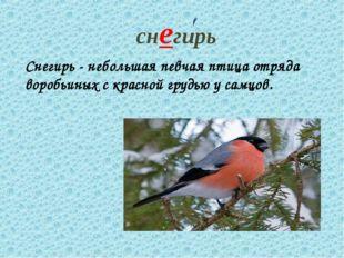 снегирь Снегирь - небольшая певчая птица отряда воробьиных с красной грудью у