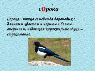 сорока Сорока - птица семейства вороновых с длинным хвостом и черным с белым