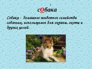 собака Собака - домашнее животное семейства собачьих, используемое для охраны