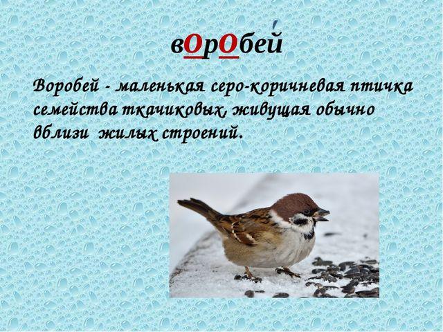 воробей Воробей - маленькая серо-коричневая птичка семейства ткачиковых, живу...