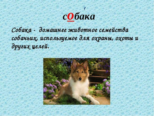 собака Собака - домашнее животное семейства собачьих, используемое для охраны...