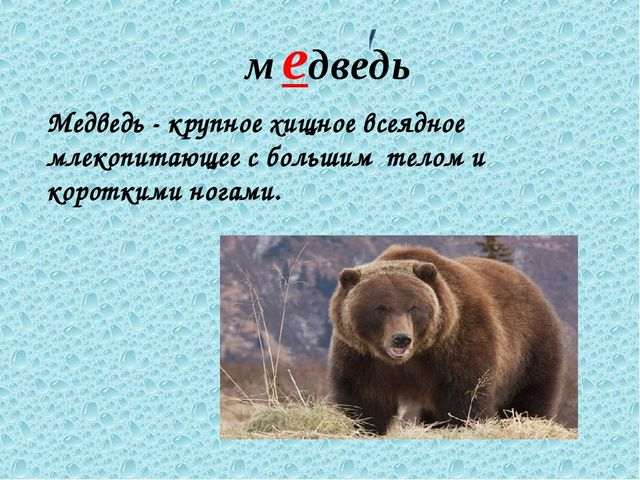 медведь Медведь - крупное хищное всеядное млекопитающее с большим телом и кор...