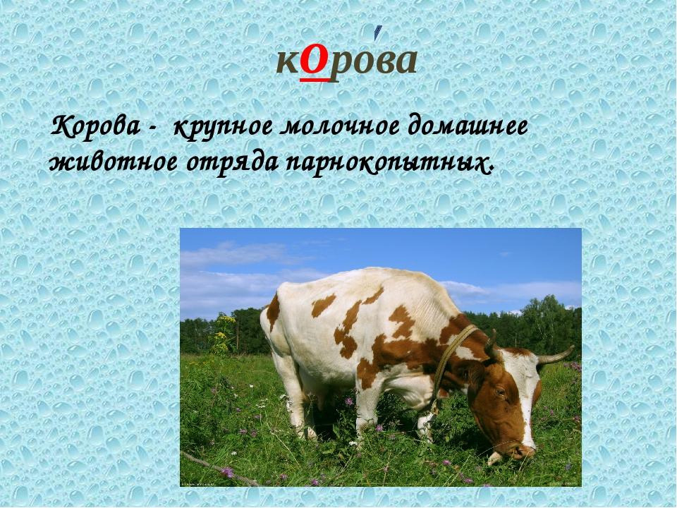 корова Корова - крупное молочное домашнее животное отряда парнокопытных.