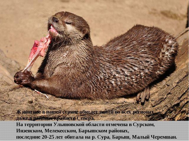 Животное в нашей стране обитает почти во всех регионах, даже в районах крайне...