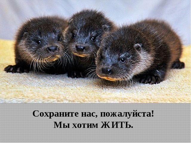 Сохраните нас, пожалуйста! Мы хотим ЖИТЬ.
