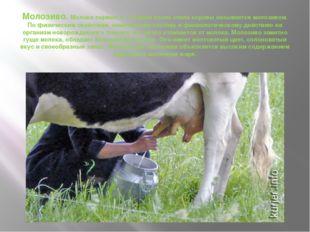 Молозиво. Молоко первых 5—10 дней после отела коровы называется молозивом. По