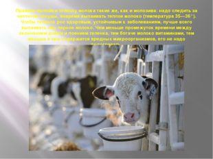 Правила выпойки теленку молока такие же, как и молозива: надо следить за чист