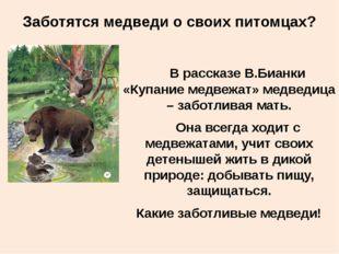 Заботятся медведи о своих питомцах? В рассказе В.Бианки «Купание медвежат» ме