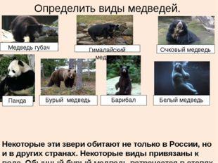 Определить виды медведей. Некоторые эти звери обитают не только в России, но