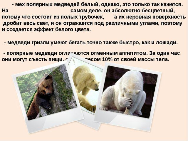 - мех полярных медведей белый, однако, это только так кажется. На самом деле...