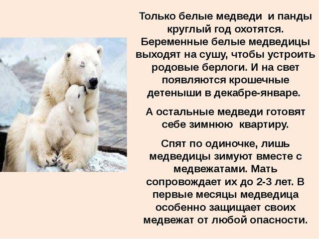 Только белые медведи и панды круглый год охотятся. Беременные белые медведицы...