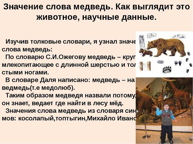 Значение слова медведь. Как выглядит это животное, научные данные. Изучив тол...