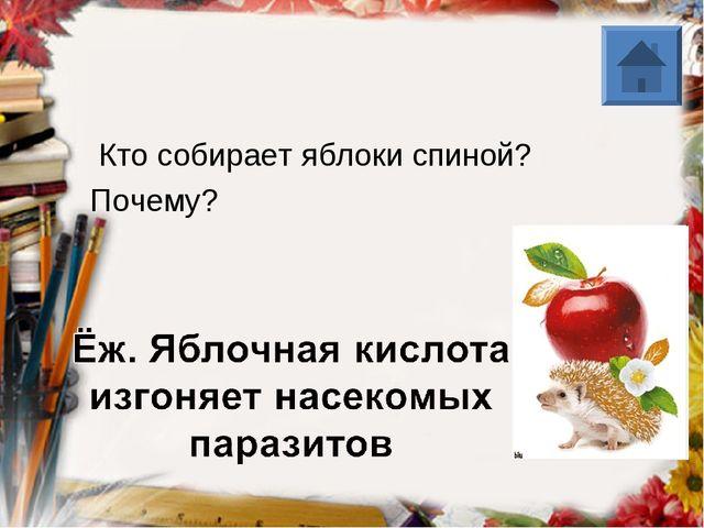 Кто собирает яблоки спиной? Почему?