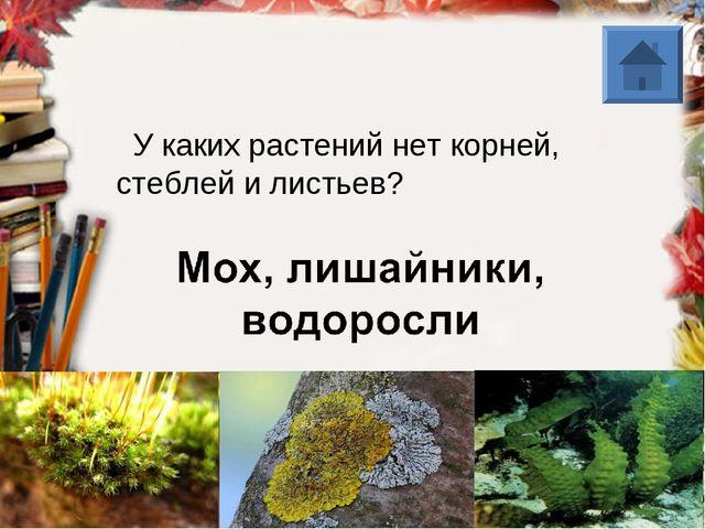 У каких растений нет корней, стеблей и листьев?