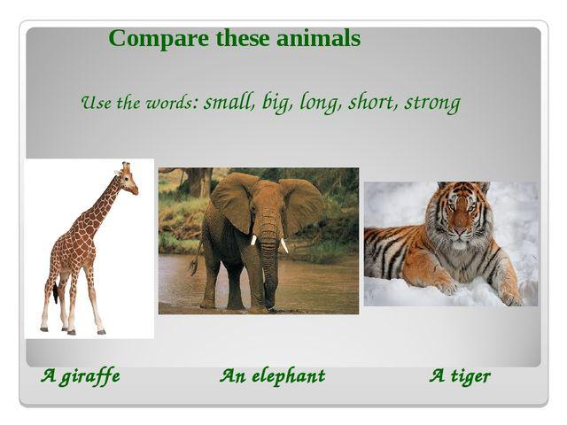 Use the words: small, big, long, short, strong A giraffe An elephant A tiger...