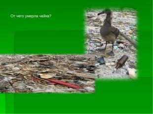 От чего умерла чайка?