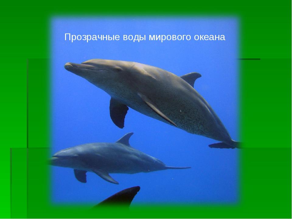 Прозрачные воды мирового океана