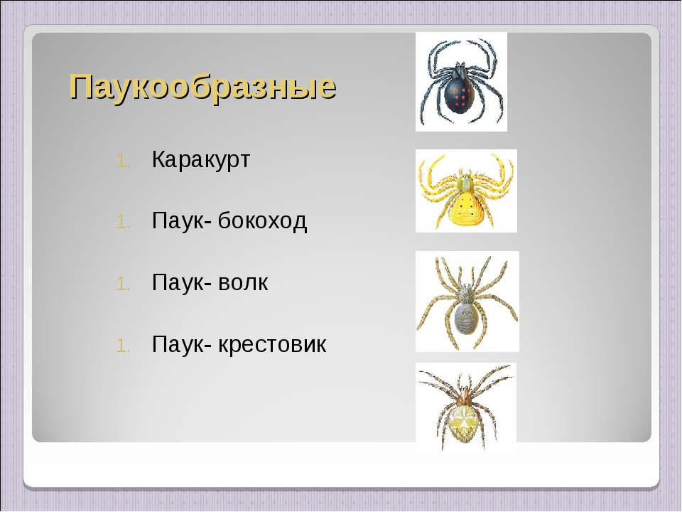 Паукообразные Каракурт Паук- бокоход Паук- волк Паук- крестовик