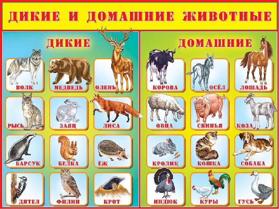 Домашние Дикие Животные
