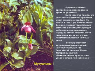Мутуализм  Прорастить семена орхидей в оранжереях долгое время не удавалось