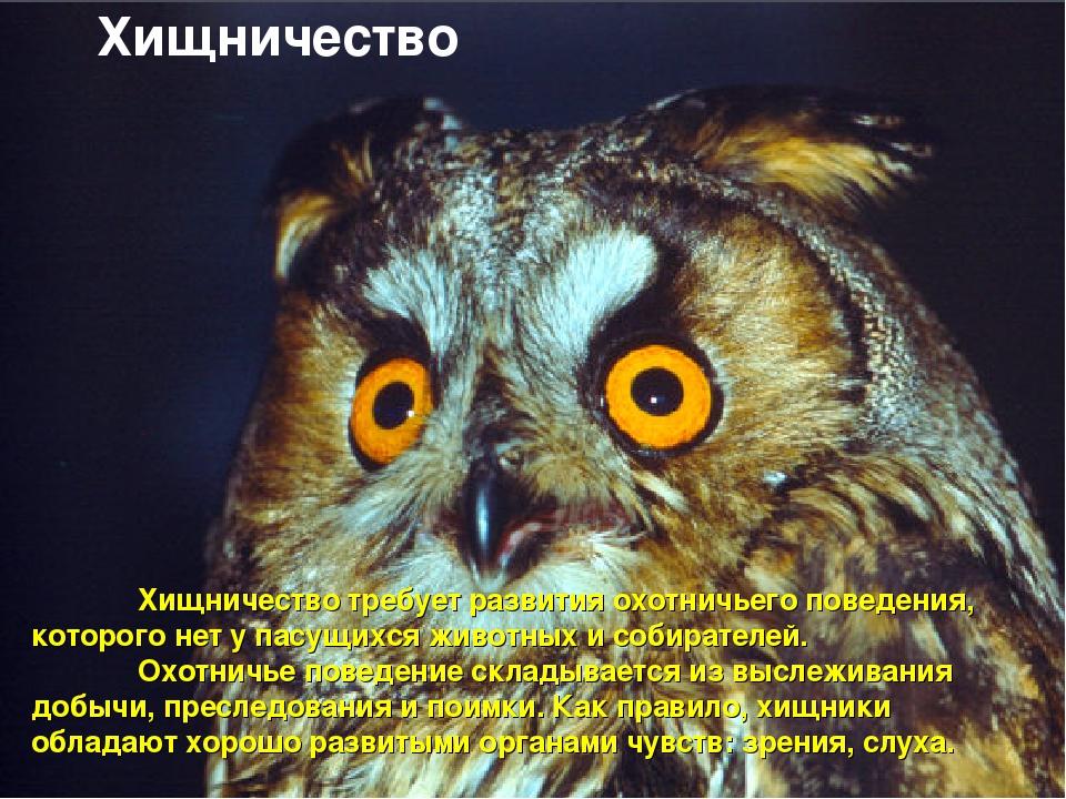 Хищничество требует развития охотничьего поведения, которого нет у пасущихс...
