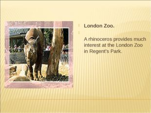 London Zoo. A rhinoceros provides much interest at the London Zoo in Regent's