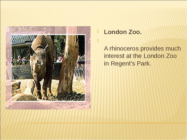 London Zoo. A rhinoceros provides much interest at the London Zoo in Regent's...