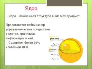 Ядро Ядро – важнейшая структура в клетках эукариот.  Представляет собой це