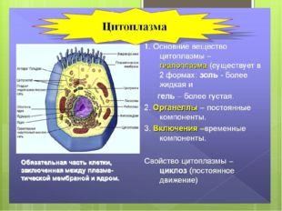 Цитоплазма Цитоплазма – вещество, заполняющее всю клетку и содержащее все кл