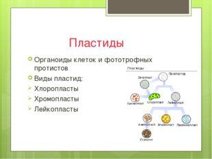Пластиды Органоиды клеток и фототрофных протистов Виды пластид: Хлоропласты