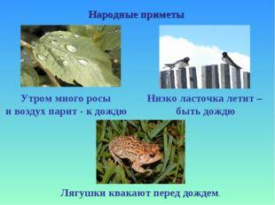 Народные приметы Утром много росы и воздух парит - к дождю Низко ласточка лет