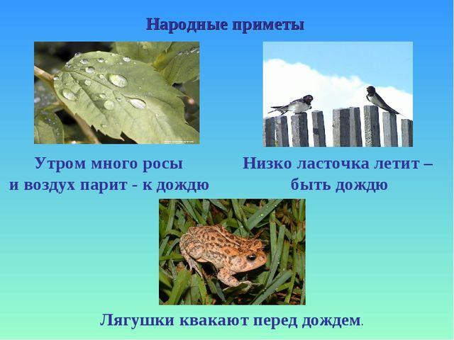 Народные приметы Утром много росы и воздух парит - к дождю Низко ласточка лет...