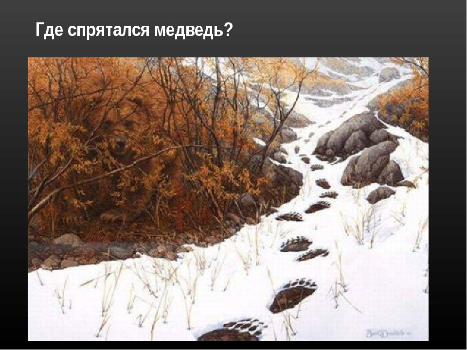 Где спрятался медведь?