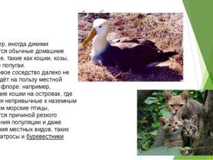 Альбатрос Например, иногда дикими становятся обычные домашние животные, такие