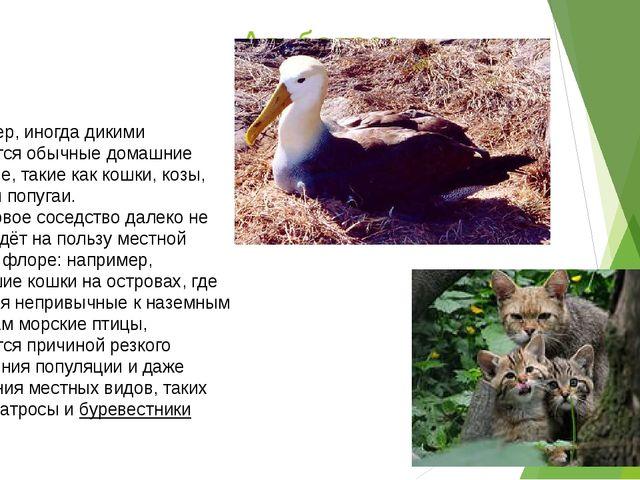 Альбатрос Например, иногда дикими становятся обычные домашние животные, такие...