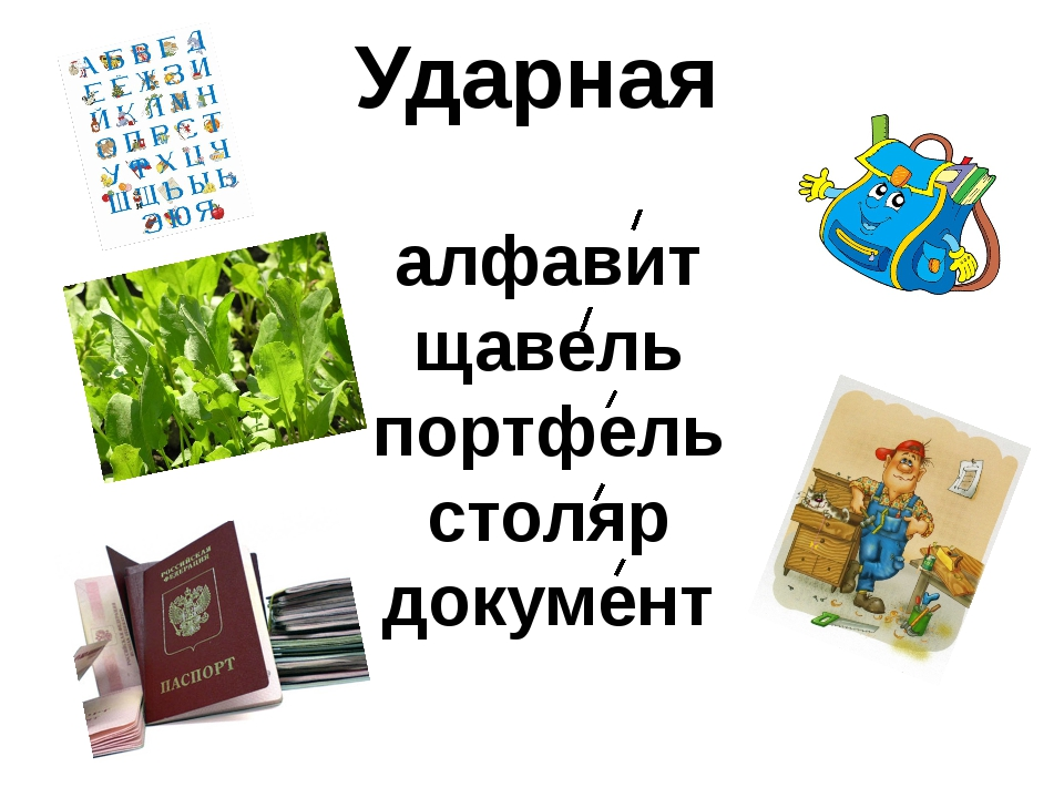 Ударная алфавит щавель портфель столяр документ