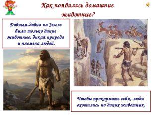 Как появились домашние животные? Давным-давно на Земле были только дикие живо
