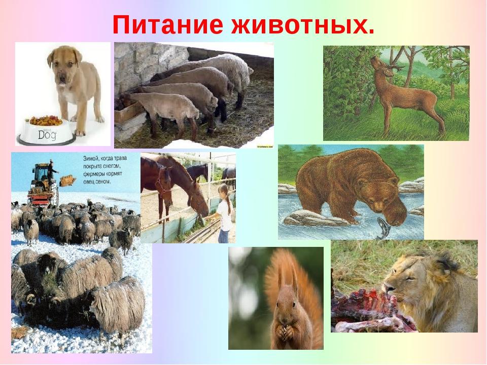 Питание животных.