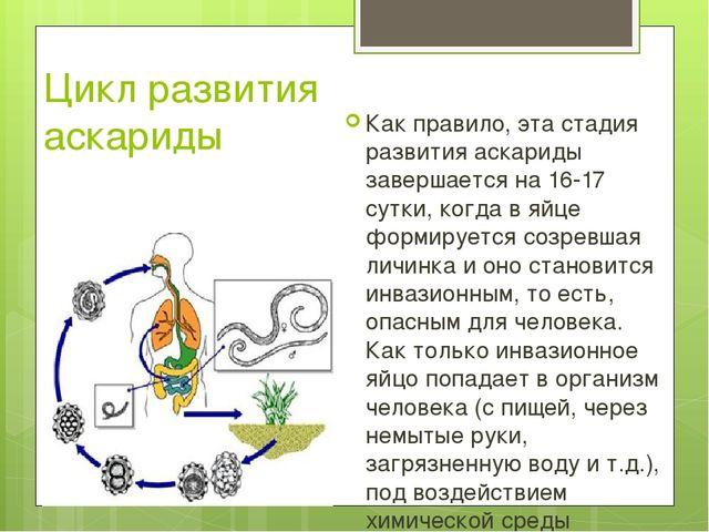 Цикл развития аскариды Как правило, эта стадия развития аскариды завершается...