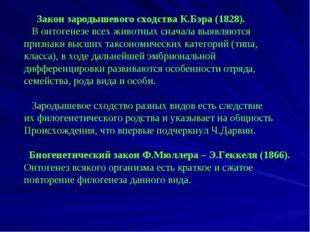 Закон зародышевого сходства К.Бэра (1828). В онтогенезе всех животных сначал