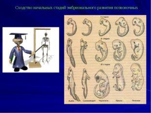 Сходство начальных стадий эмбрионального развития позвоночных